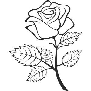 Rastliny a kvety (13)