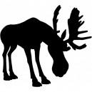 Divoké zvieratá 131