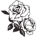 Rastliny a kvety (1)