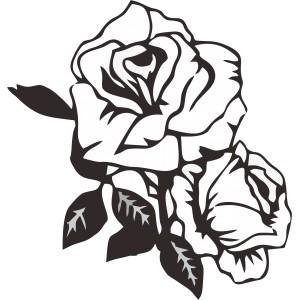 Rastliny a kvety (8)