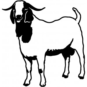 Domáce zvieratá (11)