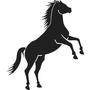 Kone (16)