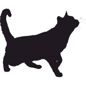 Mačky (6)