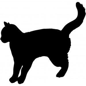 Mačky (13)