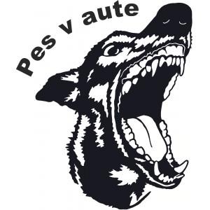 Psi (11)