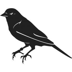 Vtáci (4)